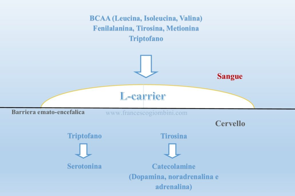 Aminoacidi barriera ematoenc